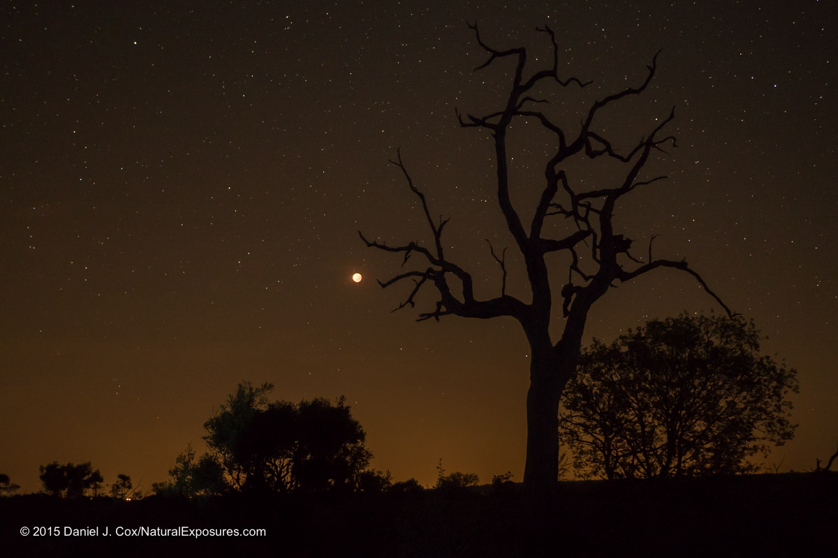 The Blood Moon rises over the Londolozi landscape in South Africa. Lumix GX8 with 15mm Leica Summilux F/1.7 ISO 800