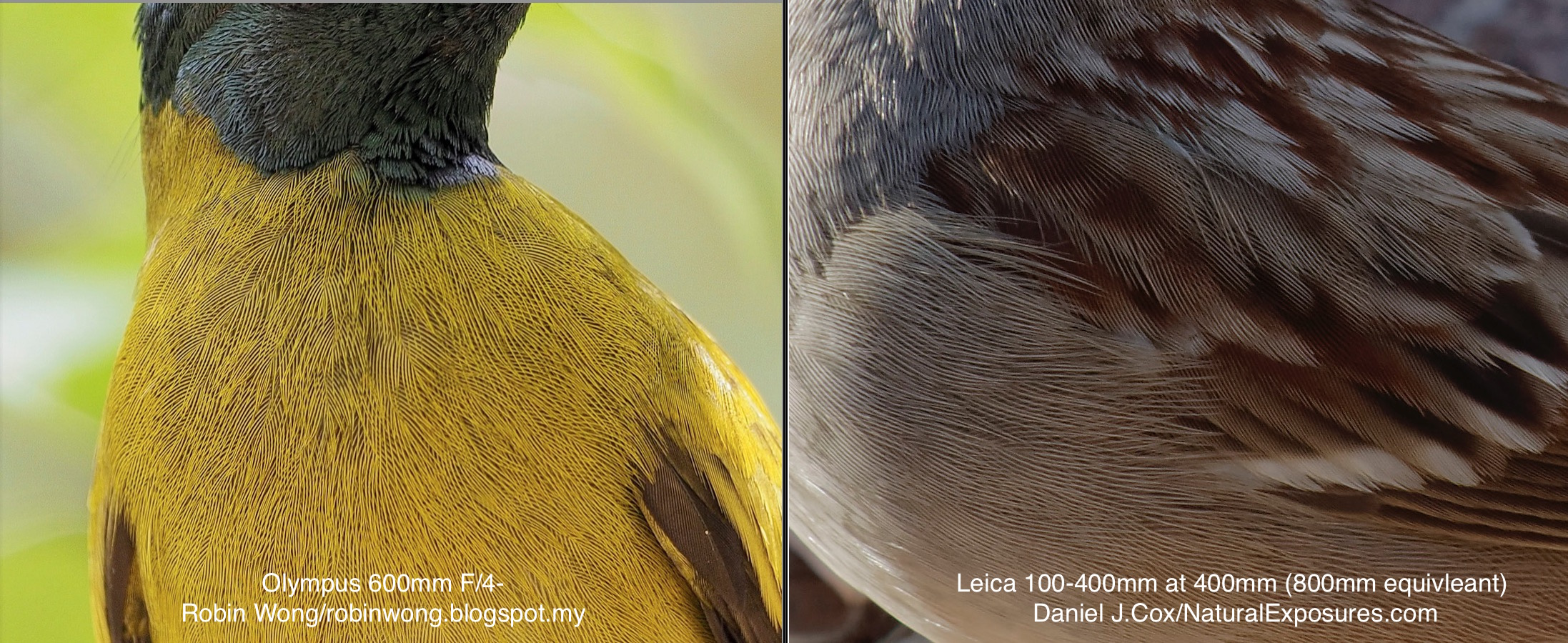 Very unscientific comparison of the new Olympus 600mm F/4 and the new Leica 100-400mm zoom.