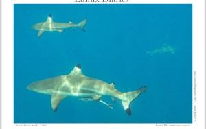 Lumix Diaries Instagram Blog copy