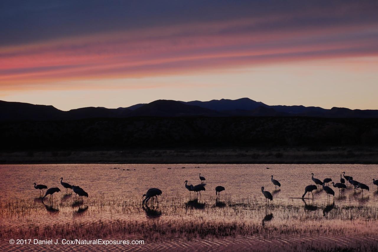 Natural Exposures Mylio Photography Workflow