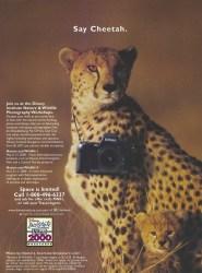Cover of Disney Institute Ad