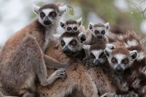 Photo for 2020 Ultimate Madagascar Photography Tour II