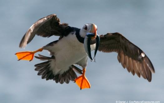birds in flight Sony a9