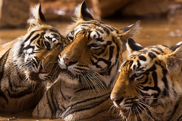 Photo for 2022 India Tiger Photo Safari