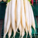 Daikon Health Benefits