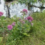 Livelong Plant Health Benefits 13
