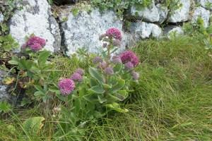 Livelong Plant Health Benefits 3