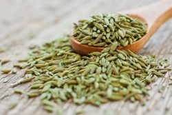 anise seed tea for babies