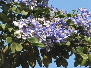 lignum vitae medicinal uses