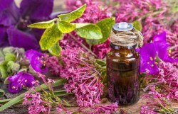 what does sage essential oil do