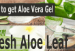 How to Get Aloe Vera Gel from fresh Aloe Leaf?
