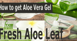 How-to-Get-Aloe-Vera-Gel-from-fresh-Aloe-Leaf