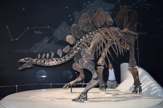 Sophie the Stegosaurus, looking very friendly. Photo credit: Aarti Bhogaita