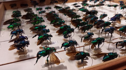 A photo of a drawer full of iridescent green wasps
