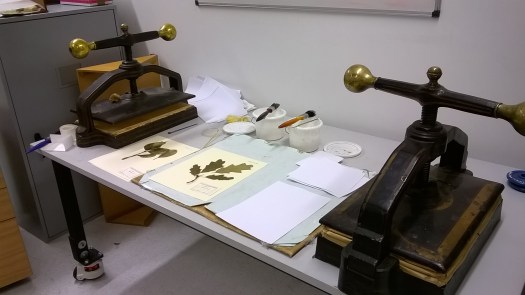 Photo of a desk with two plant presses and a selection of herbarium sheets in between