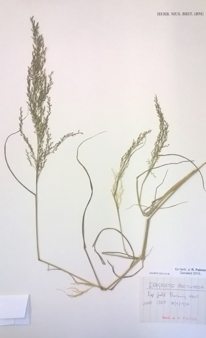 Photo of a herbarium sheet showing specimen and labels