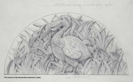 Photo of the original sketch of the Dodo design for an inset in the Museum by Waterhouse