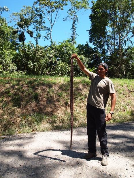 Photo of a colleague holding aloft a dead boa
