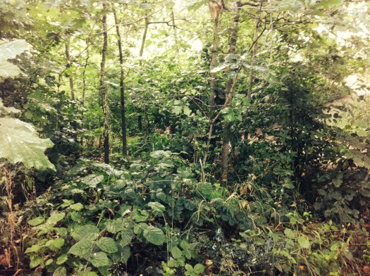 Photo of woodland with a fox cub barely visible in the centre of the photograph, obscured by leaves and branches from the plants