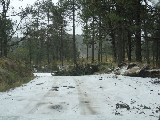Photo showing a tree lying across and partially obscuring the snow covered road