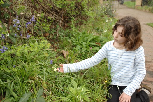Photo showing a young child kneeling on a path and reaching out to hold one of the flowers