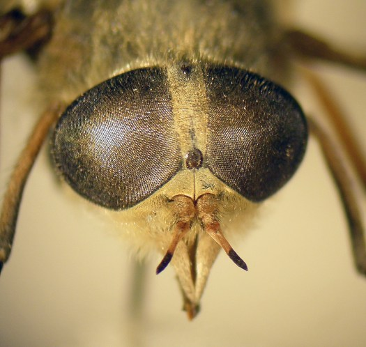 Macrophoto focussed on the head of the specimen