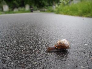 Snail on tarmac
