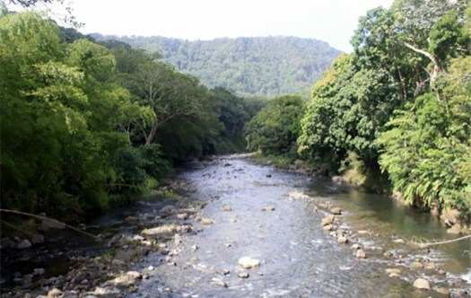 Photo showing a view of a shallow, rocky river with deep forest on either side