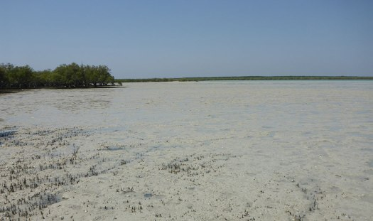 Photograph of exposed sand and mangrove in Broome, Australia