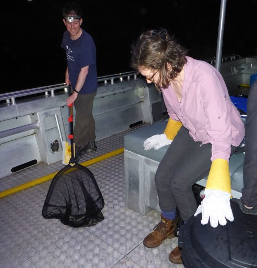 Bruno Simoes holding a net containing a sea snake, and Jenna Crowe-Riddell, on a boat at night