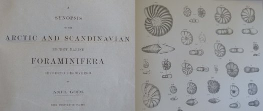 Goes Foraminifera Arctic and Scandinavia