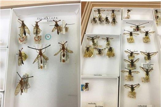 Pinned flies