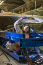 Photo of the conservator seated on a metal frame supporting the skull of the whale, looking and reaching upwards at the bone while working on it.