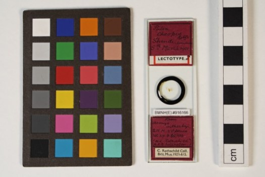 Photograph showing the slide of the lectotype specimen, with scale bar to the right, and coloured panel to the left