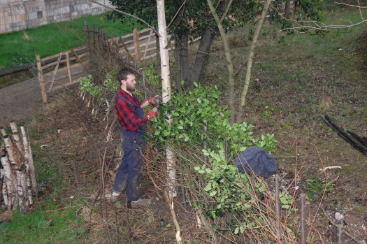 Photo with hedge stretching from bottom right to near the left-top of the image. Daniel, wearing a red and blue check shirt and navy blue dungarees, is standing next to the hedge to the centre left of the photo, positioning the bindings.