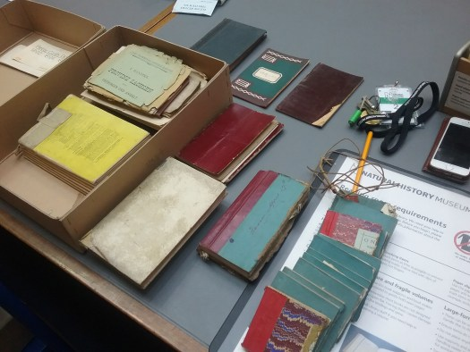 A selection of cashbooks, cheque books and maps laid out on a table by the author during her visit to the public Library and Archives reading room. On the left are two piles (unknown quantity), sitting inside an archive box with the lid removed. To the right are approximately 16 others loosely distributed on the table. All relate to Walter Rothschild and Tring Museum, and come from the Natural History Museum Archives collection. Reference number TM3/1. The authors phone, pencil, readers pass, pencil pot and 'reading room requirements' place mat can also be seen on the table