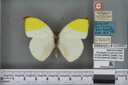 The Gideona lucasi type specimen imaged from both the front and the back