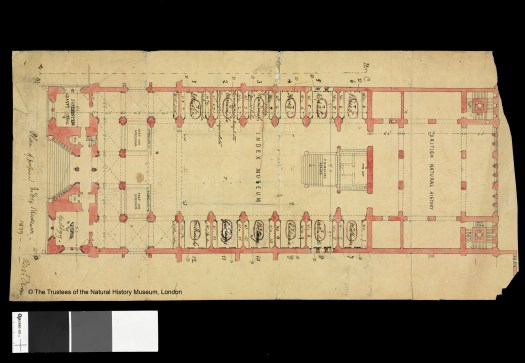 Paper plan showing the floor layout of the proposed central hall of the British Museum (Natural History), now the Natural History Museum. The plan is dated 1879 two years before the building opened. The plan shows the space labelled as the Index Museum and includes hand written ink notes for the contents of each specimen bay.