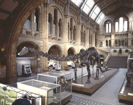 Colour photograph taken of the Hintze Hall during the 1980s, the photographer is standing with their back to the main entrance. The large diplodocus model sits along the centre of the hall facing the photographer on a raised platform, with its tail on the floor. To the bottom left in front of this model are two glass display cases and the top half of a Museum visitor information board. Various displays are visible in the Hintze Hall bays but are too far away to determine their content.