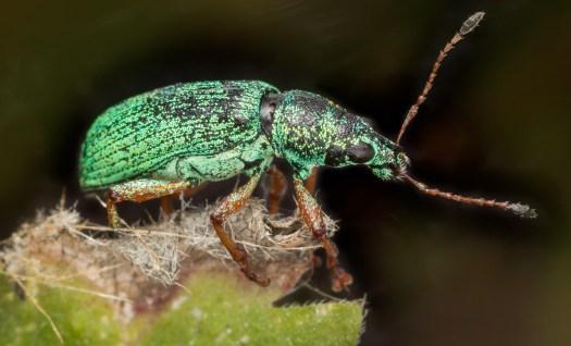 beetle-blog-5