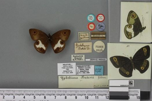 4) butterfly