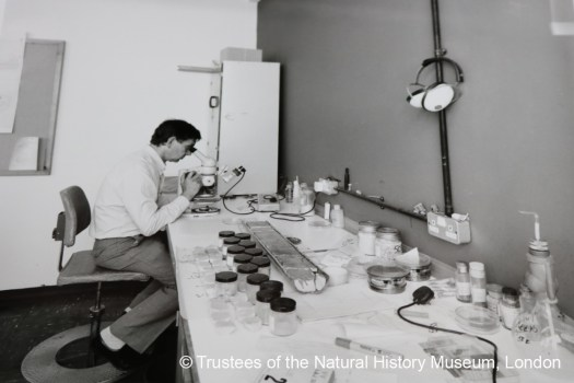 Henry Buckley working on the Ocean Bottom Deposit collection in 1986