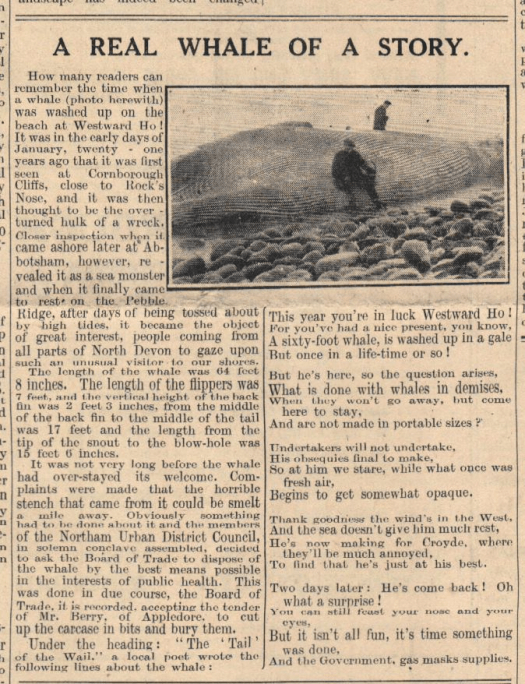 Westward Ho whale newspaper article