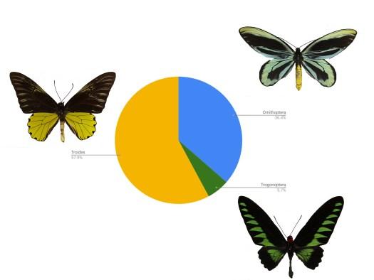 Chart of birdwing breakdown