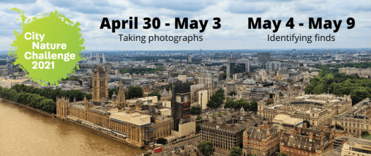 London landscape with City Nature Challenge logo and information on when it runs: April 30 - May 3 2021 (photographing nature) and May 4 - May 9 2021 (identifying finds)