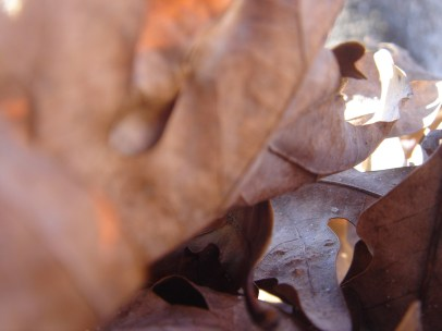 Leaves - too close, but intriguing.