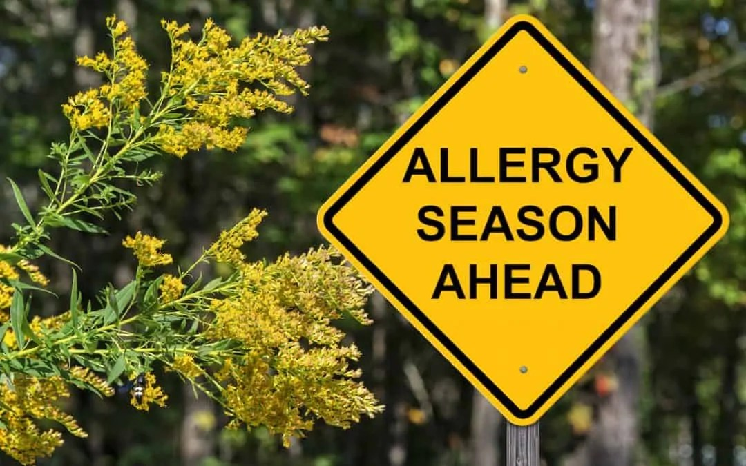 Home Remedies for Seasonal Allergies That Work!