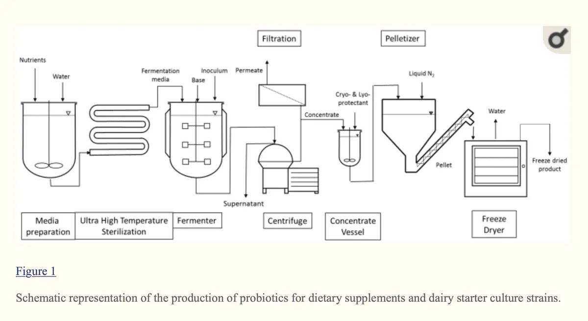 probiotic production