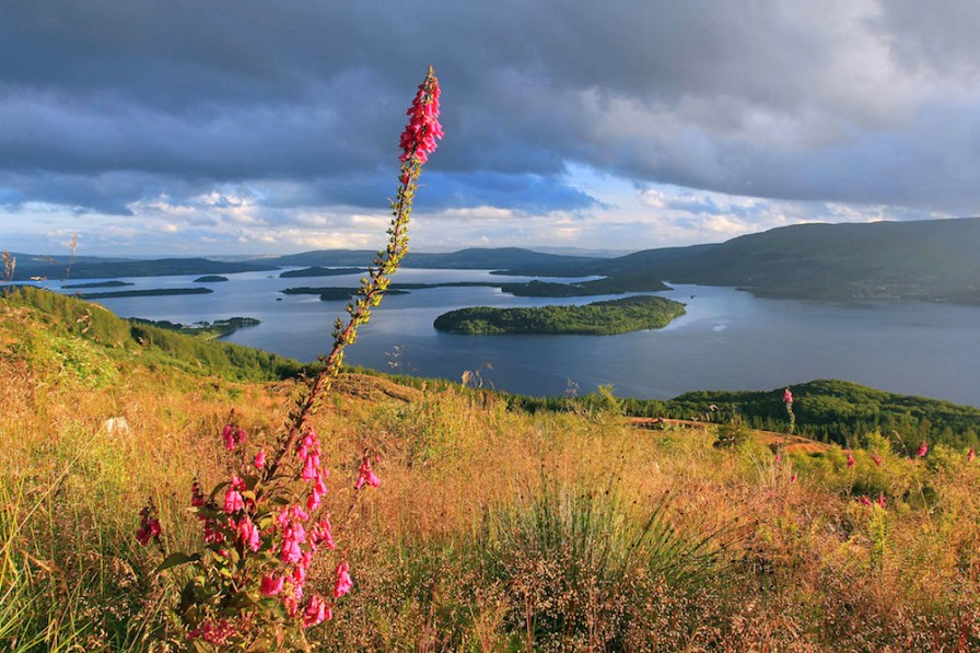 Loch Lomond, taken from the Rowardennan Forest above Sallochy. ©Agniszka Wojciechowska