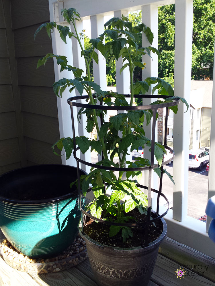 Summer Balcony Garden Fail and Lessons Learned | Naturally Stellar